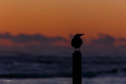 ocean morning sea sky orange color beach animal japan canon landscape sunny 日本 海岸 海 fukushima iwaki morningglow 福島県 fineweather 2013 eos6d いわき市 70300f456l