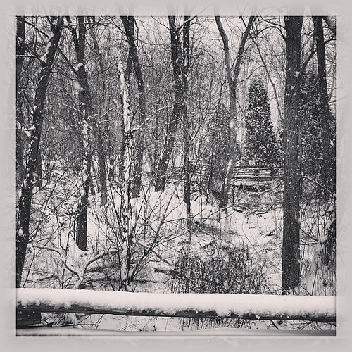 Winter scene in black and white #b&w #nature