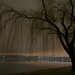 Leafless willow on the Potomac by ay-oh