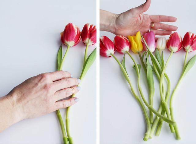 lay out tulips