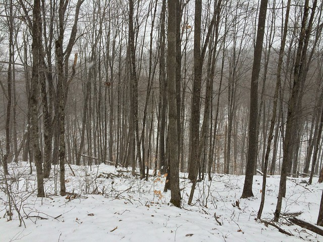 Norwich, Parcel 5, Parcel Five Loop Trail, Vermont
