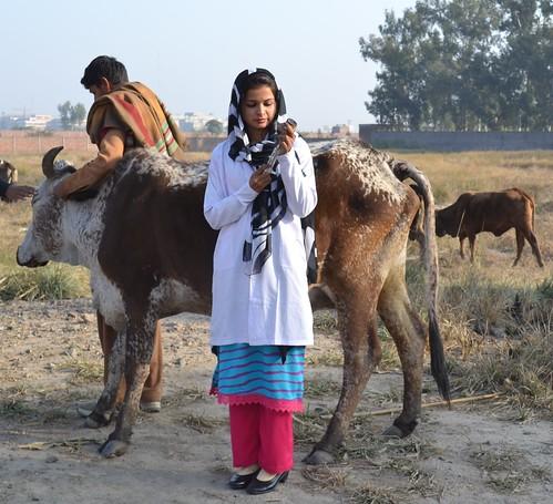 Kiran Zulfiqar, livestock worker