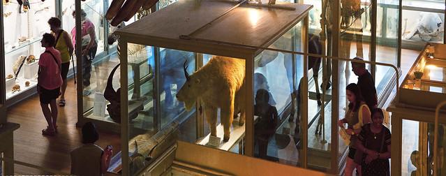 Harvard Natural History Museum; Cambridge, MA (2016)