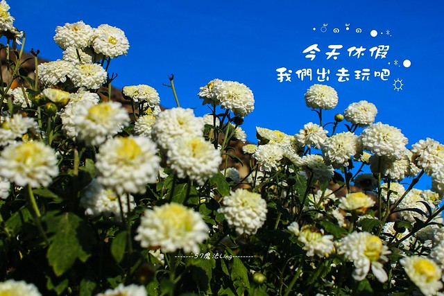 IMG_9874-7