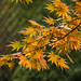 The Colors of Autumn - HFF!