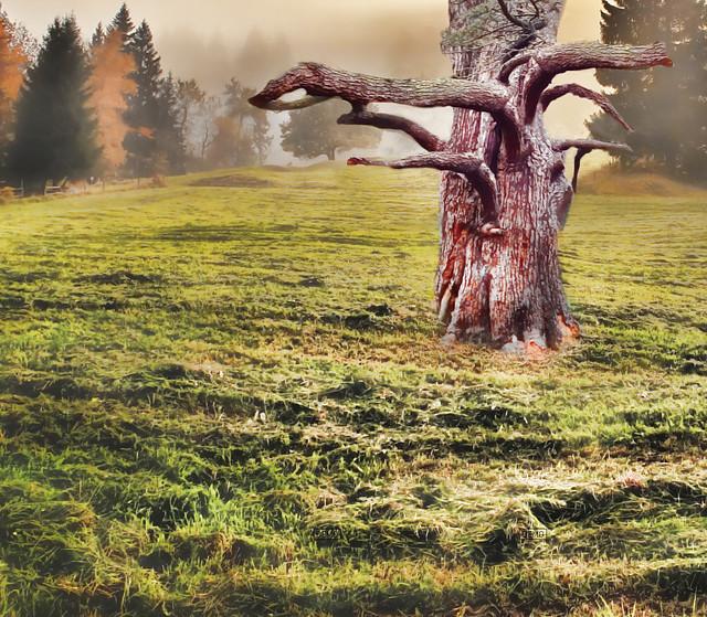 Premade Background  Tree