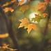 November by Tammy Schild