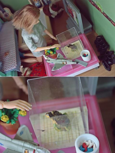 a little turtle