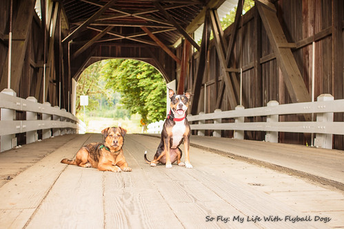 Harris Covered Bridge-4490