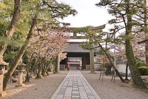 【写真】2013 桜 : 御香宮神社/2019-10-26/IMGP9752