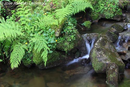 Parque Natural de Gorbeia #DePaseoConLarri #Photography 1