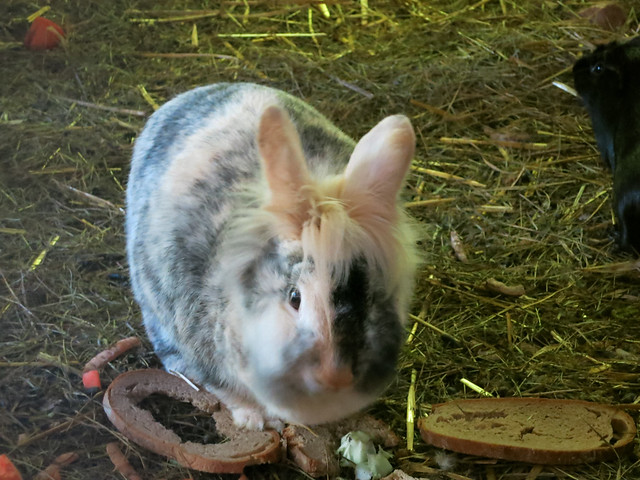 Rabbit with a cool do