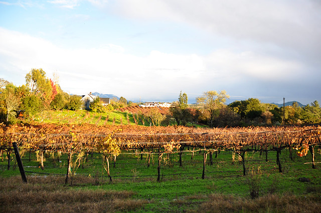 Guide to Healdsburg_7