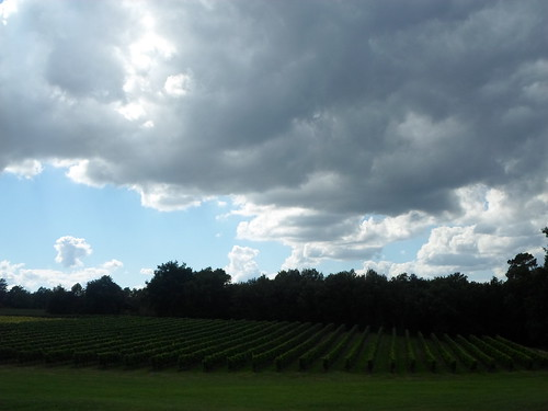 Heavy skies, Verdant Vines