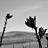 Dustin Howell - @Dustin L Howell - Flickr