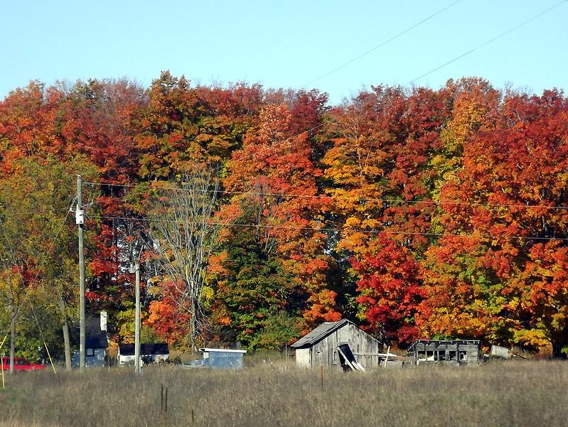 Fall Colours Michigan