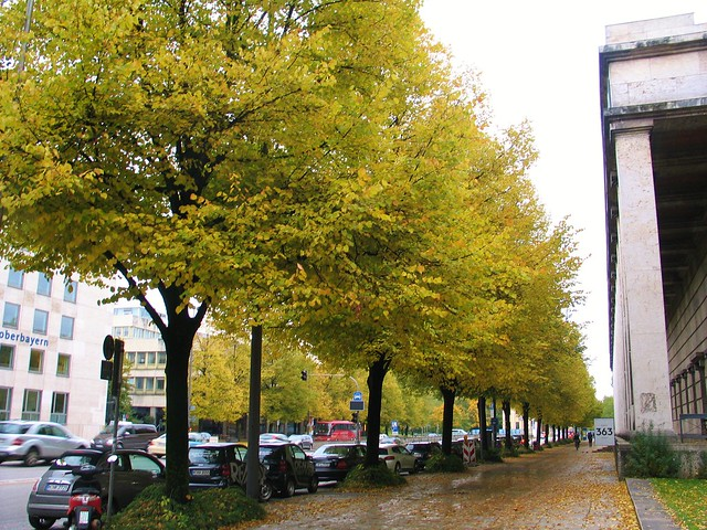 Autumn colours outside Haus der Kunst, Munich