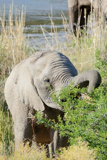 Elephants in Sanbona-11-1
