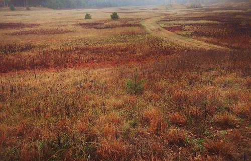 park county autumn trees fall colors field wisconsin landscape foliage eauclaire iphone lowescreek vsco
