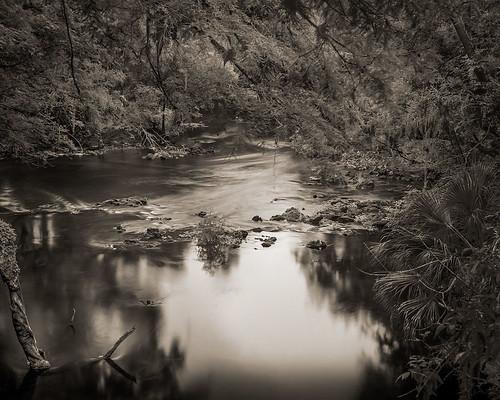 bw film tampa landscapes florida fineart 4x5 largeformat hillsboroughriver 2013 fineartweb ebonysv45ti jaspcphotography josesuro