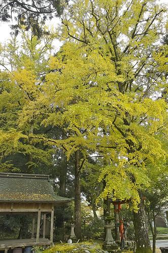【写真】2013 紅葉 : 岩戸落葉神社(2)/2020-07-30/IMGP3158