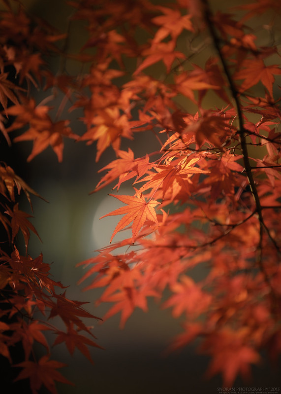 Formal beauty / Foliage Season -15-