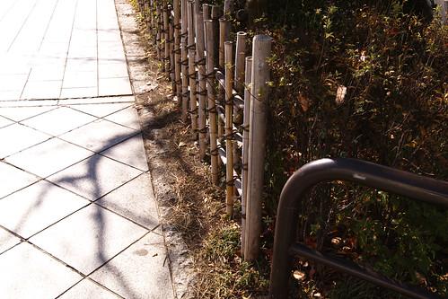 歩道脇の住人 by leicadaisuki