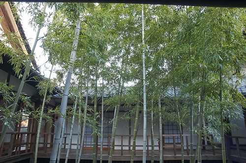 【写真】2013 紅葉 : 妙顕寺/2020-11-01/IMGP4161