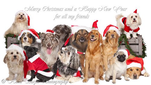 Merry Christmas and Happy New Year ..12 dogs (one for every month)!