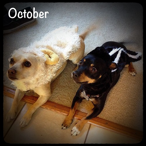 October- Halloween Dogs