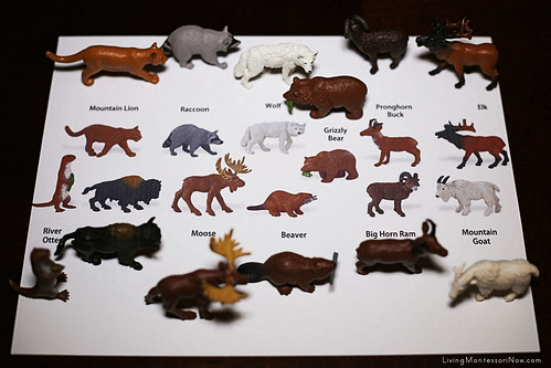 North American Animal Matching Using Safari Ltd