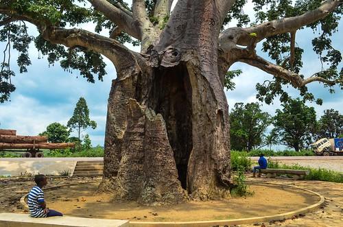 L'arbre de Brazza, Dolisie