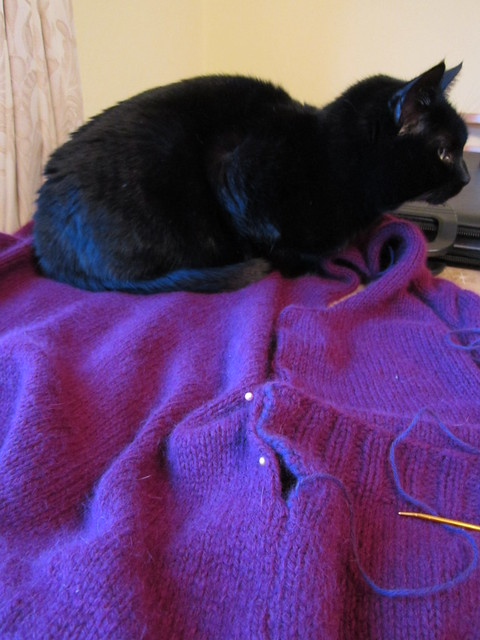 Flo helps with the sewing up! 004