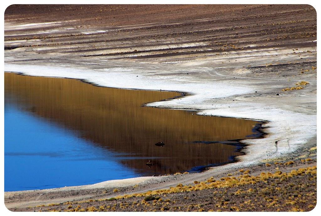 laguna Miñiques atacama desert