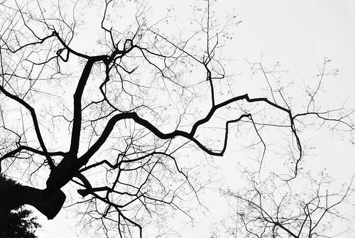 Tree Pattern Berlin Kreuzberg Viktoriapark