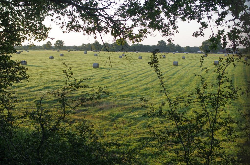 Dormir dans les arbres - vue imprenable sur les champs depuis la terrasse
