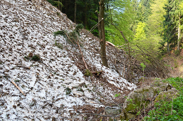 Avalanche damage, Walking above Lake Ledro, Italy