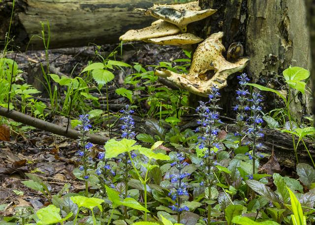 Forest Scene 109