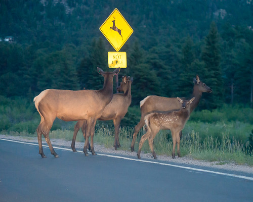 road sign nationalpark highway colorado crossing wildlife fawn rmnp elk herd rockymountainnationalpark 2014 floyka wildlifewednesday