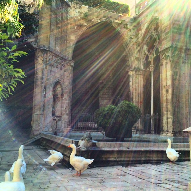 Geese in the cloister, p u! (Also honk honk)
