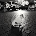 Cat & Car