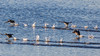 Running on Water by Daniel-Godin