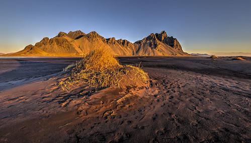 vestrahorn vesturhorn dunes dawn kambhorn stokksnes canonef1124f4l 5d3 5d 5dmarkiii canon5d3 sunrise stokkness stokknes