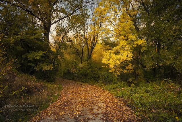 Caminos de otoño
