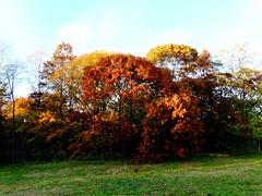 Brookside Preserve - Autumn (70)