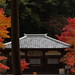 Autumnal leaves,Jingo-ji,Kyoto by yopparainokobito