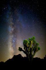 Milky Way, Joshua Tree National Park, California