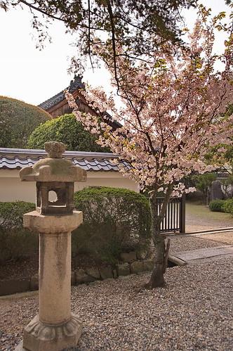 【写真】2013 桜 : 御香宮神社/2019-10-26/IMGP9738