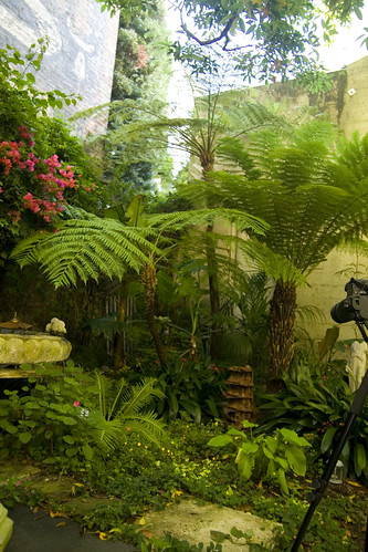 Organic Mechanic tree ferns