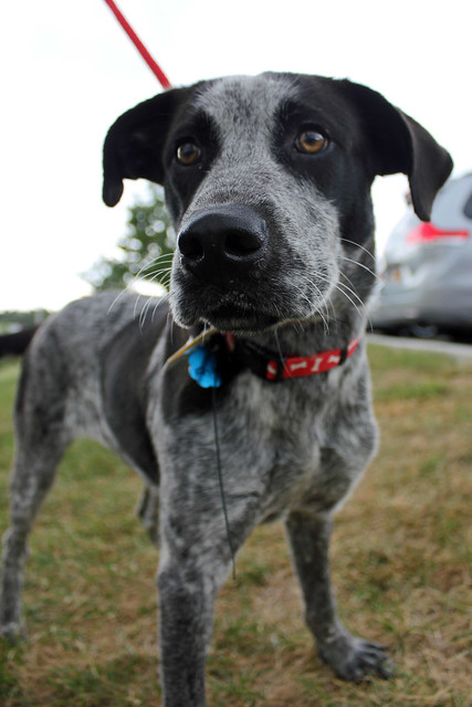 Hunting Dog Rescue Groups Virginia